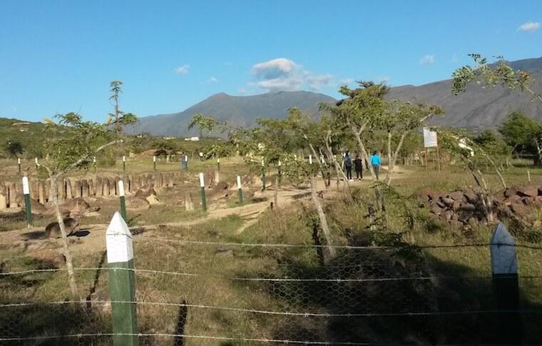 7 days in colombia pelicula completa en español